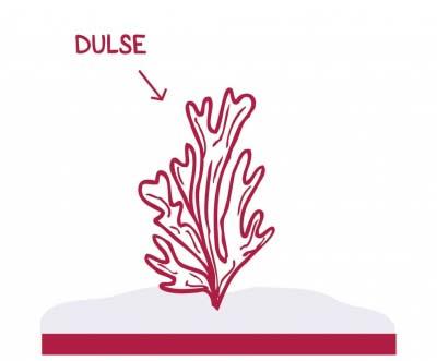 algue-dulse-la-marmite-de-lanig