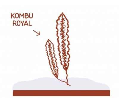 algue-kombu-royal-la-marmite-de-lanig