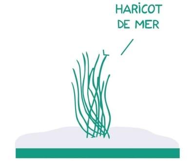 haricot-de-mer-la-marmite-de-lanig